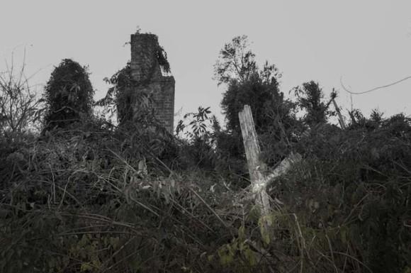 鬱蒼と木々が生い茂った中に潜んでいたのは、放棄されたペットたちの墓場だった。「忘却の墓場」