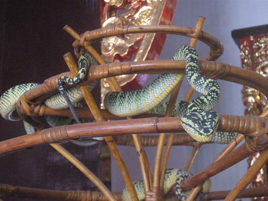 Snake-Temple-Penang4