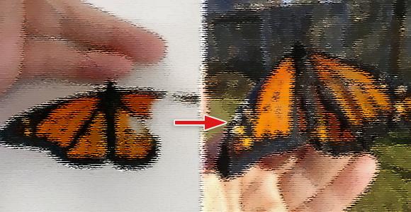 羽が欠けた状態で生まれてきた蝶々、死んだ蝶々の羽を利用して修復に成功!(※蝶と幼虫出演中)