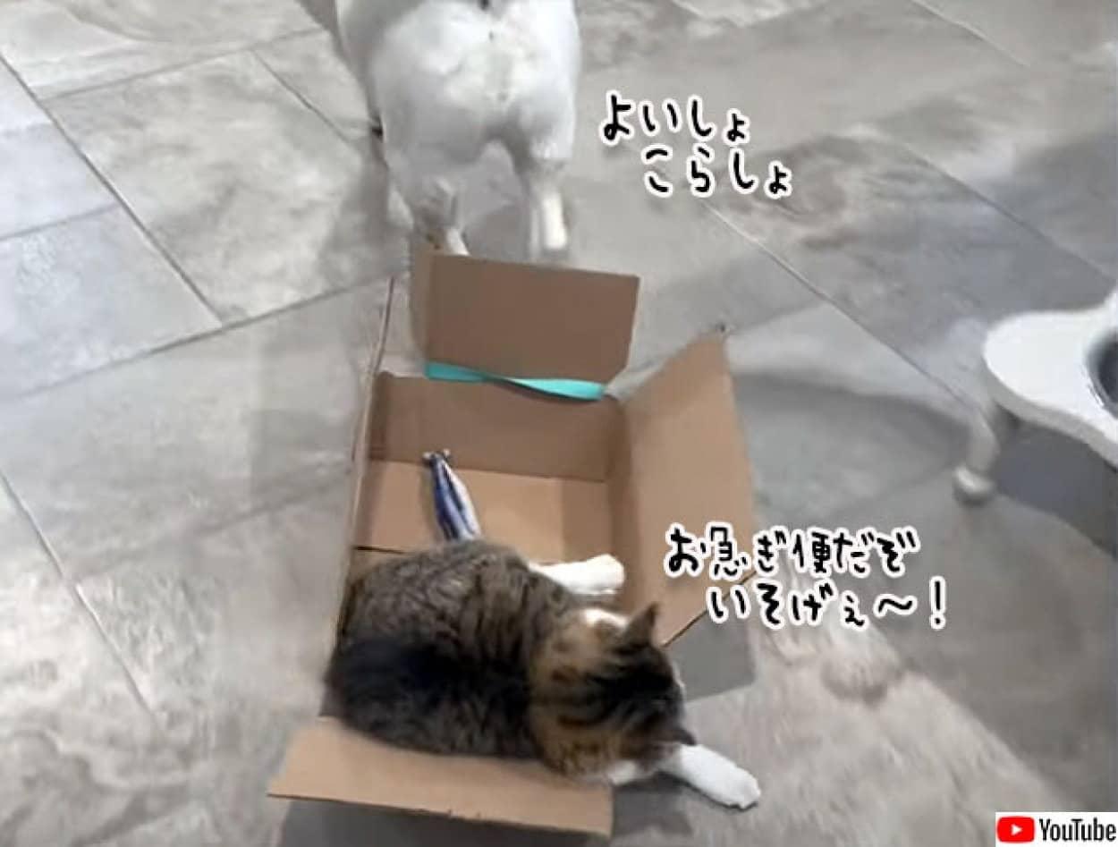 犬がダンボールに入った猫を運ぶ