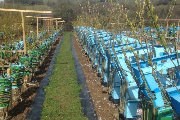 まさに世界珍百景。なんかもう、そのまんま家具。家具を育てて収穫する農場の現場映像(イギリス)