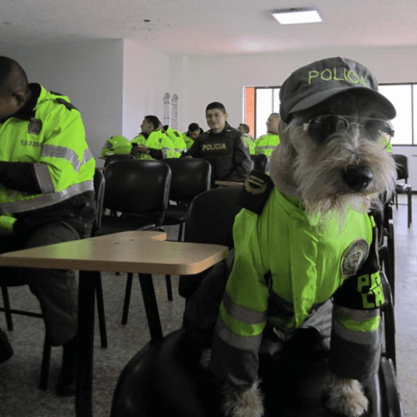 police5_e