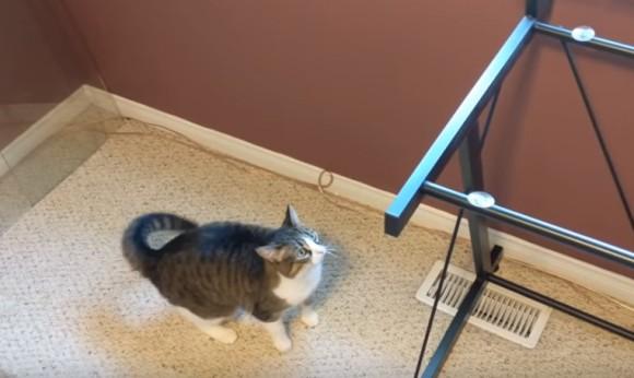 猫にガラス。いつも乗っかっているガラステーブルのガラスを取り去ってみた。こうなった。