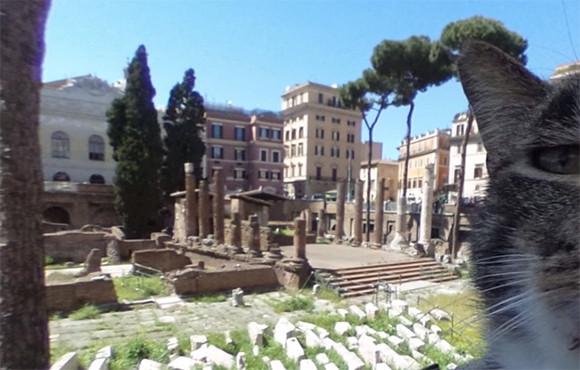 ローマの遺跡「トッレ・アルジェンティーナ広場」が猫の聖域に。Google ストリートビューを覗いてみると?(イタリア)