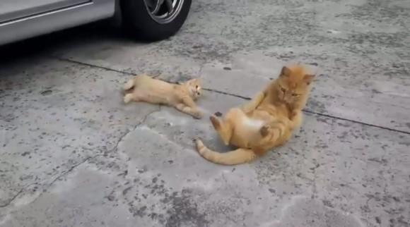 尊い。大人猫からゴロンの極意を学ぶ子猫の仕草