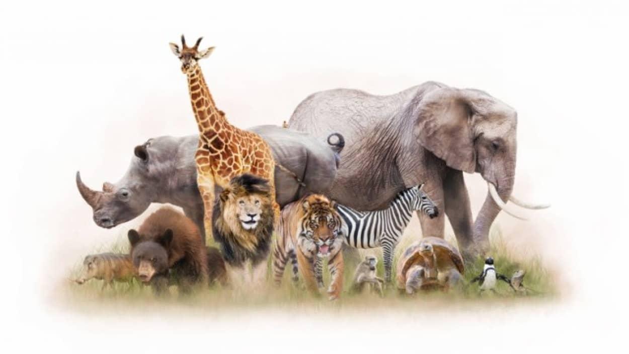 動物たちの組織をを低温保存している冷凍動物園