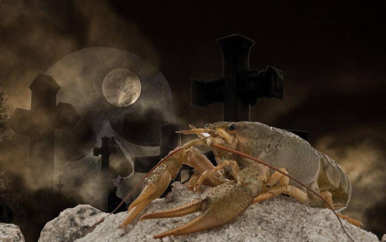 クローンザリガニが墓地を占拠
