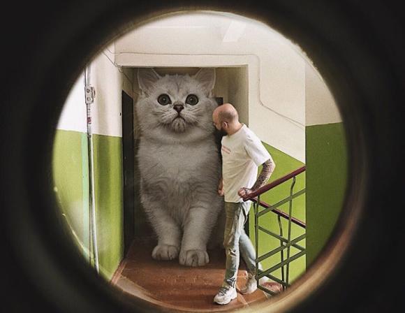あったらいいなを現実世界に。巨大猫がいる都市空間をコラで表現してみた