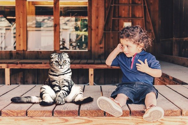 飼い猫が自閉スペクトラム症の子供の症状を改善してくれるという研究結果