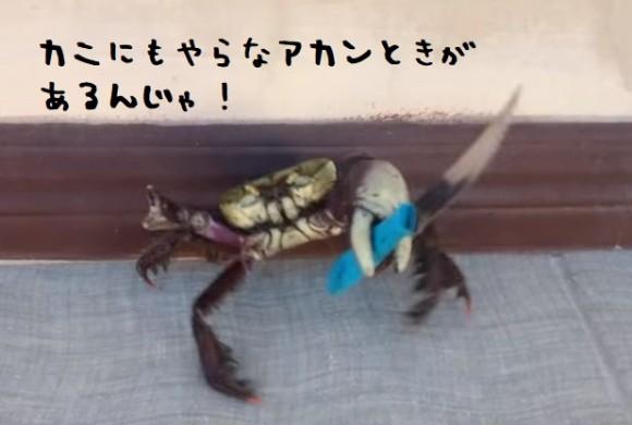 crab1_e