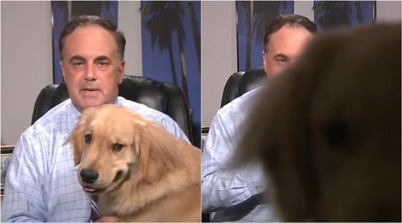 今度は犬が!自宅からお天気中継中、レポーターを妨害する放送事故(アメリカ)