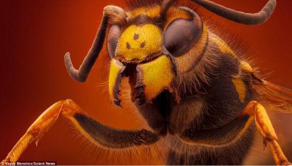 拡大するほどに愛されポイントが見えてくる。昆虫やクモの頭部の鮮明なマクロ写真「ミニ・ビースト」