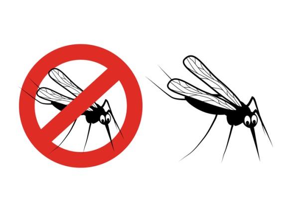 遺伝子組み換えしたオスと交尾させて子孫を殺す。ビル・ゲイツが蚊の開発に4億3600万円相当の資金を提供
