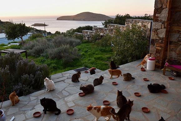 55匹の猫のお世話をするお仕事です。エーゲ海に浮かぶ美しい島の猫たちのお世話係を募集中(ギリシャ)