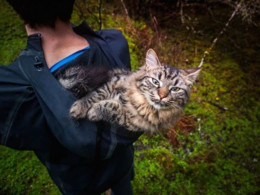 these-kittens-were-abandonus-5__880_e
