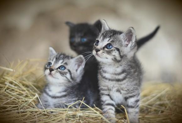 cat-3535399_640_e