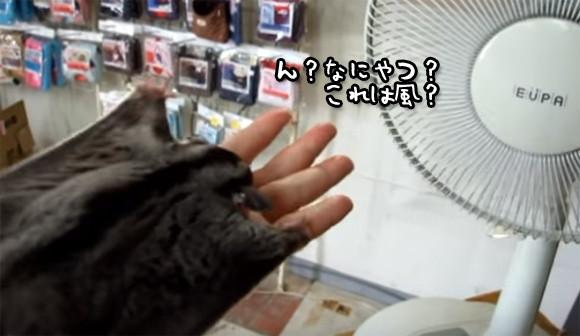 ん?これは!!扇風機の風にうっかりだまされるモモンガのかわいい仕草