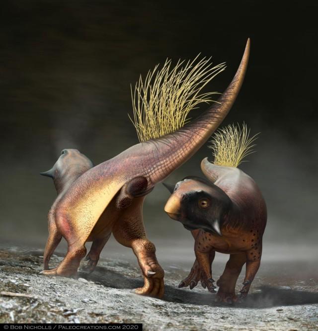 恐竜のお尻の穴の復元に成功