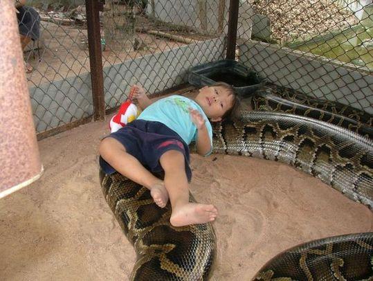 giant_pet_snake_02