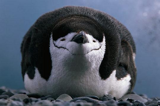 penguins_10