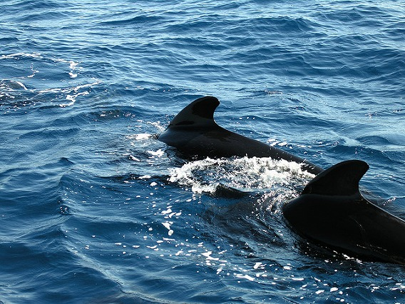 synchronized swimming animals 16