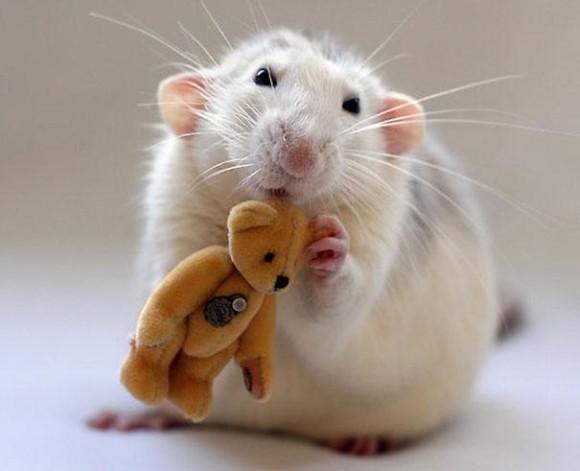 rats-with-teddy-bears-ellen-van-deelen-5_e
