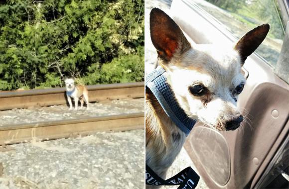 何かがおかしいと思ったら直感を信じて!迷子の犬の飼い主を見つけた女性のエピソード