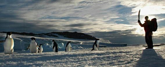 ペンギンの「性的堕落」が約100...
