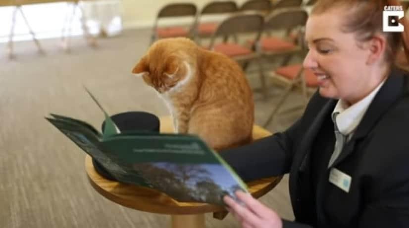 funeral cat4_e