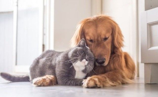 仲良きことは麗しきかな。周囲をほっこり気分にさせる猫と犬とのラビングユー