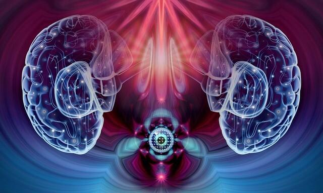 目と脳の神経ネットワークの進化