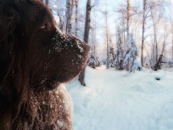 本気の大きさ。世界8種の大型犬図鑑
