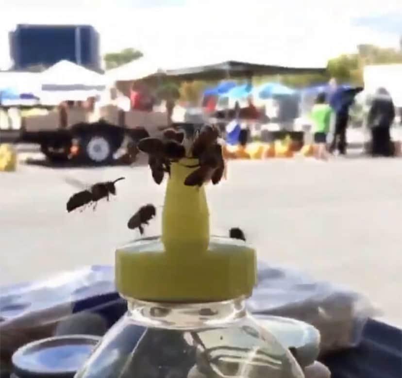 はちみつを取り戻そうとするミツバチ