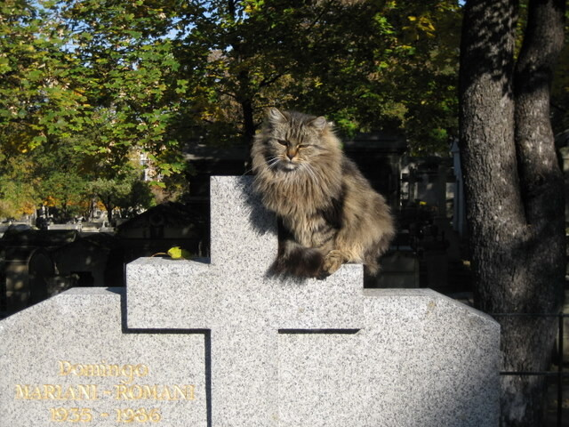 Montmartre Cemetery Cats-1
