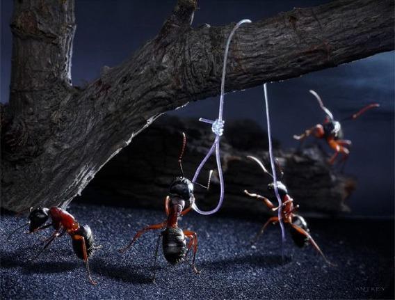ants_25