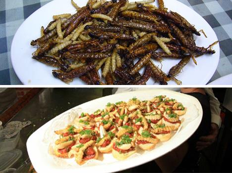 caterpillars-and-witchetty-grubs
