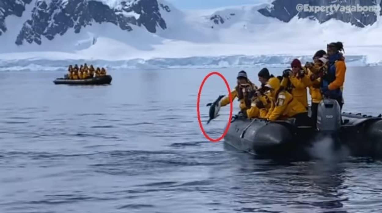 シャチに追われたペンギンが人間のボートに助けを求める
