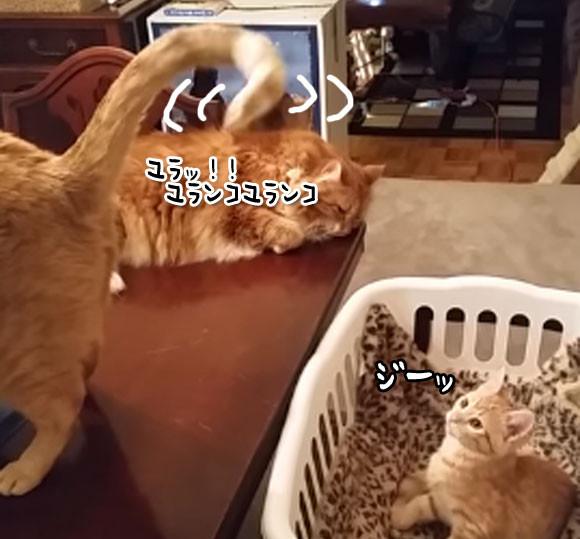 猫の特殊能力がまた明らかに。尻尾で催眠術をかける猫