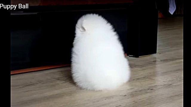 モチ?子トトロ?それとも白い毛玉かよ!と今話題のこの物体の正体は?