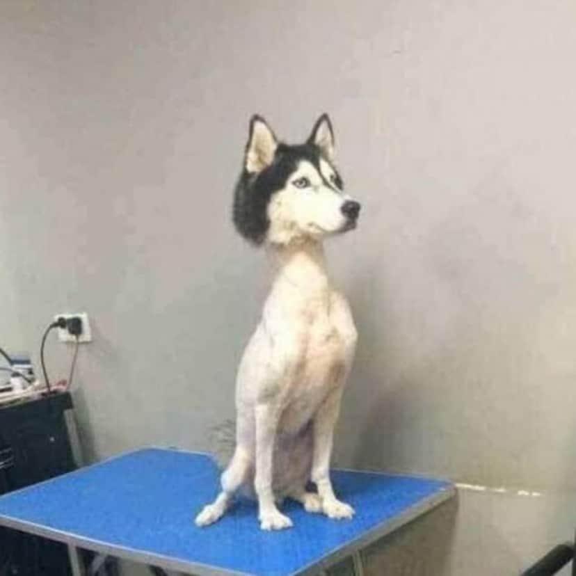 perros-husky-recreoviral-11-700x700