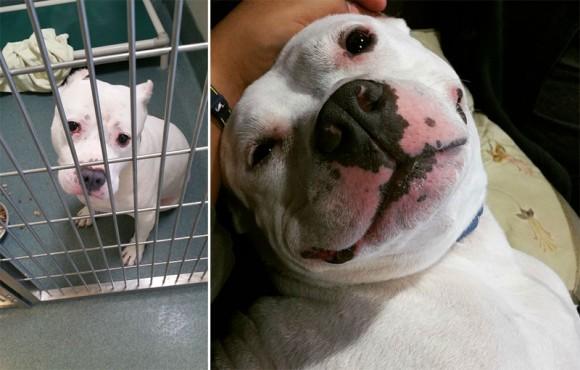 これはからはずっと一緒だよ。保護されていた捨て犬が、新しい家族として迎えられた後の変化がわかるビフォア・アフター写真 Part3