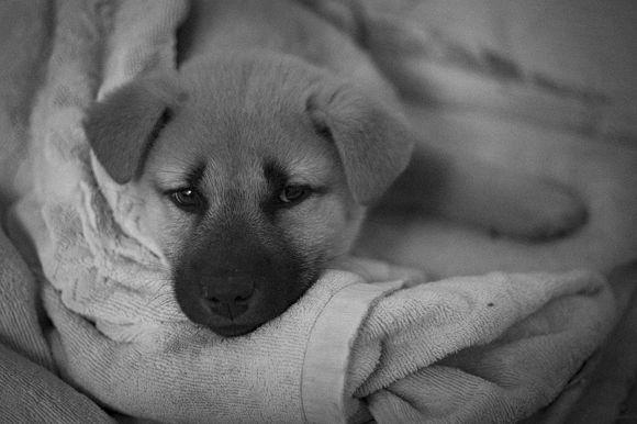 puppy_pixabay