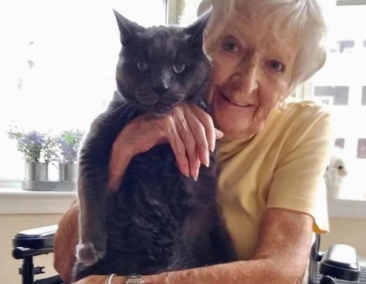 老猫とおばあさんが最高のパートナーに