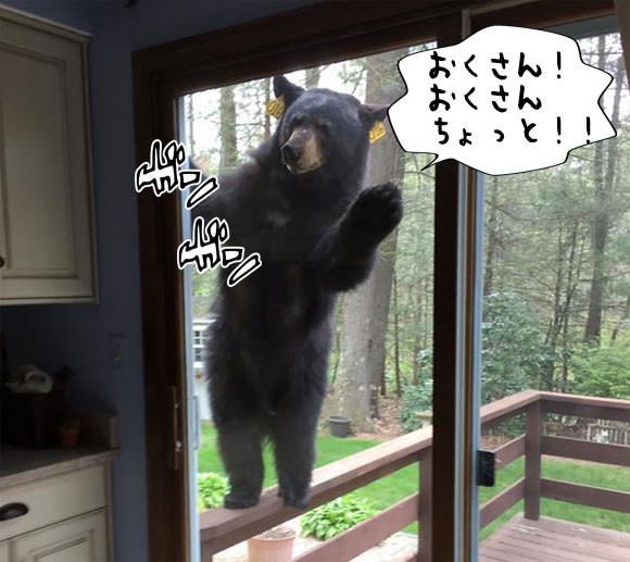 お菓子を焼いたら窓からクマー!「お茶会ですか?参加しましょう」招かざる巨大な訪問者が現る(アメリカ)