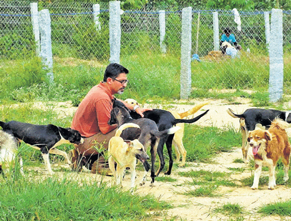 引き取り手のない735匹の犬の面倒を見るインドの「犬のおとうさん」