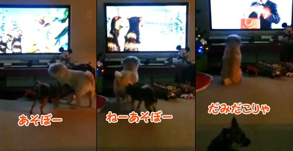 「ちょ、ダメ、今は無理」テレビ好きの犬、仲間に誘われてもテレビにくぎ付け