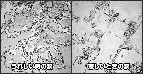 うれし涙と悲し涙ではこんなに違う。人間の涙を顕微鏡で観察した「涙のトポグラフィー」