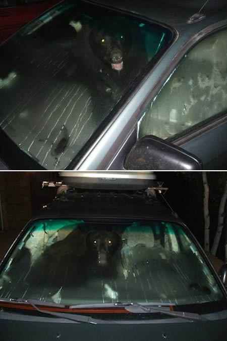 a97299_g187_7-bear-car