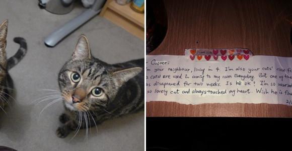 仲良しだった兄弟猫。突如1匹が亡くなった。残された猫の首輪に小さなメモが。そこには隣人の猫に対する想いが込められていた(イギリス)