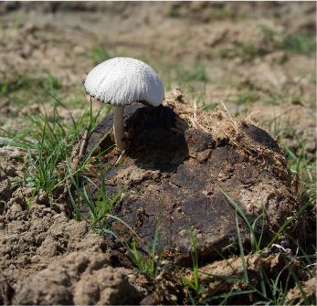 mushroom2-1-1